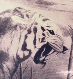 Grafito-Tigre